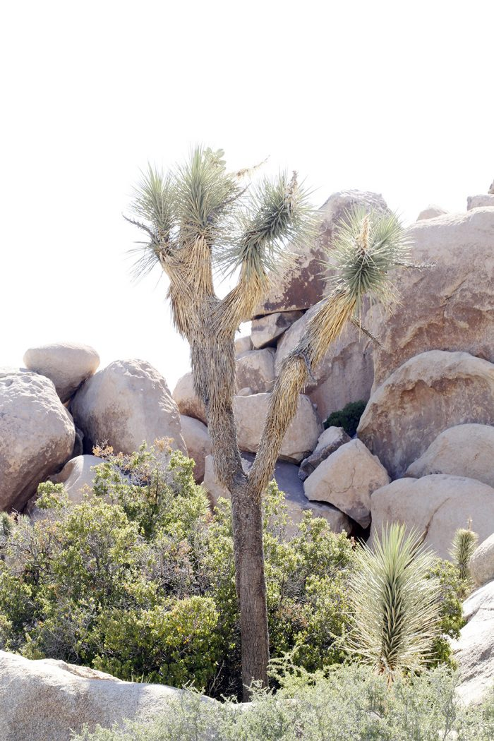Joshua Tree Rock Climbing 10