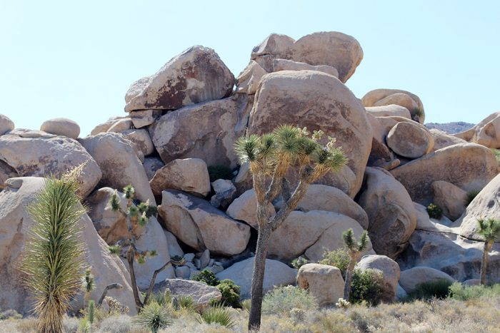 Joshua Tree Rock Climbing 2